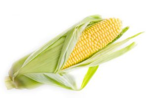 corn starch for bioplastics